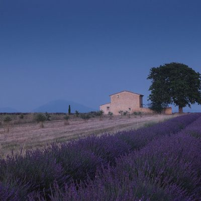 Typical Provence house with lavender fields