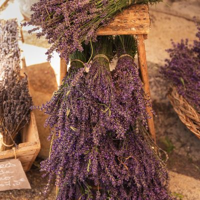 Bouquet of harvested lavender