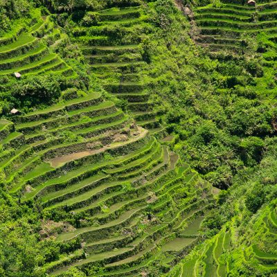 Close up to antic Batad rice terraces of Philippines
