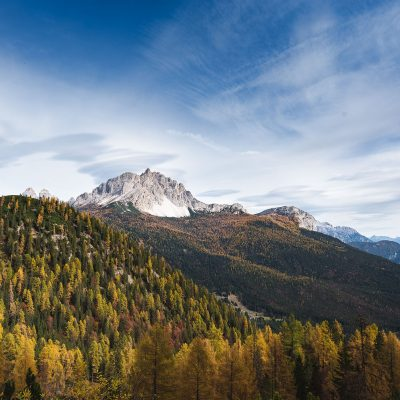 Pine forest of Dolomites during Fall