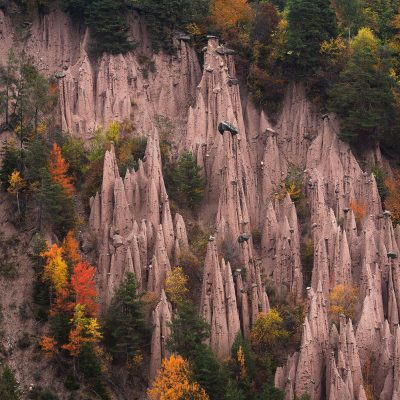 Earth pyramids or hoodoos of Dolomites surround by golden trees during fall