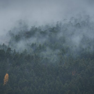 Foggy and cloudy morning over a forest with a single golden tree