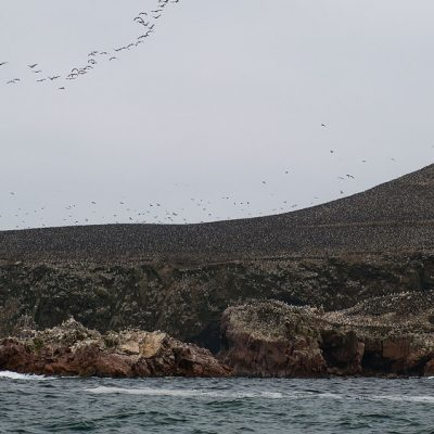 Paracas National Reserver is home of thousands of birds