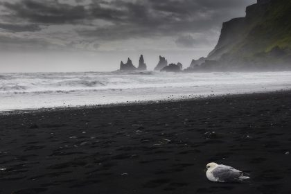 Black sand beahc of Vik in Iceland on a cloudy day