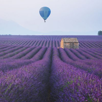 A hot air balloon flying above a lavender fields of Provence