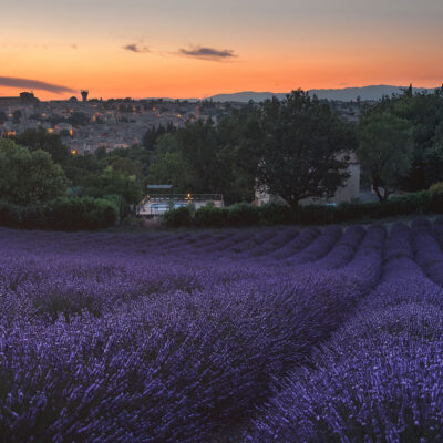 Lavender field with Valensole town in background at sunset